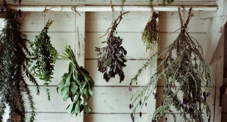 745x400-herbs